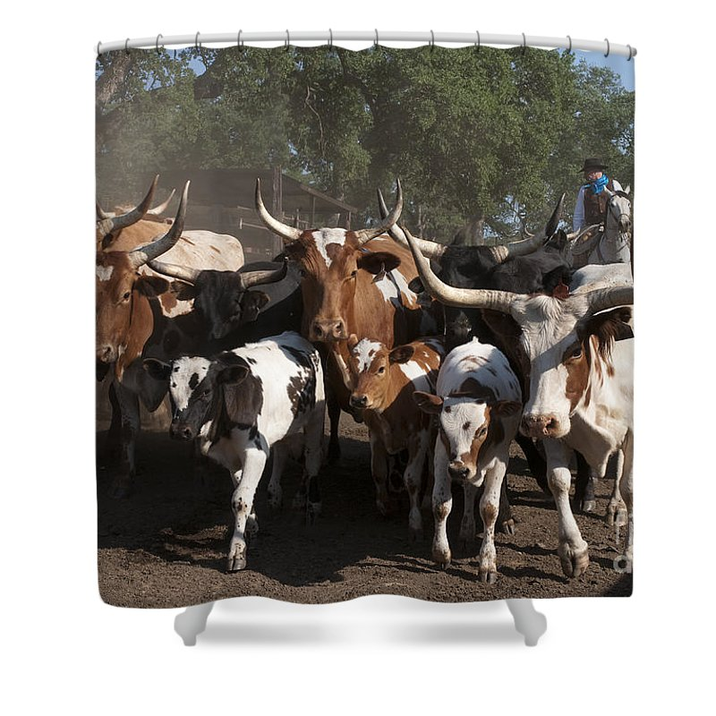 Western Shower Curtain featuring the photograph Movin' Out by Sandra Bronstein