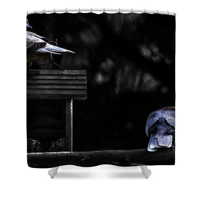Doves Shower Curtain featuring the photograph Mr. And Mrs. Dove by Wolfgang Stocker