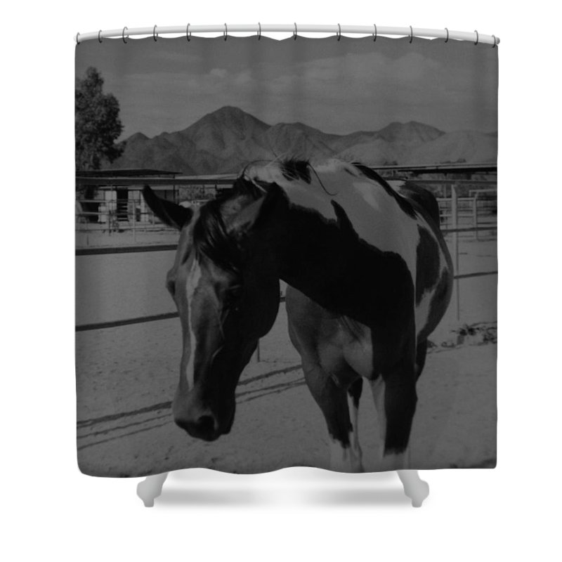 Black And White Shower Curtain featuring the photograph Mr Ed In Black And White by Rob Hans