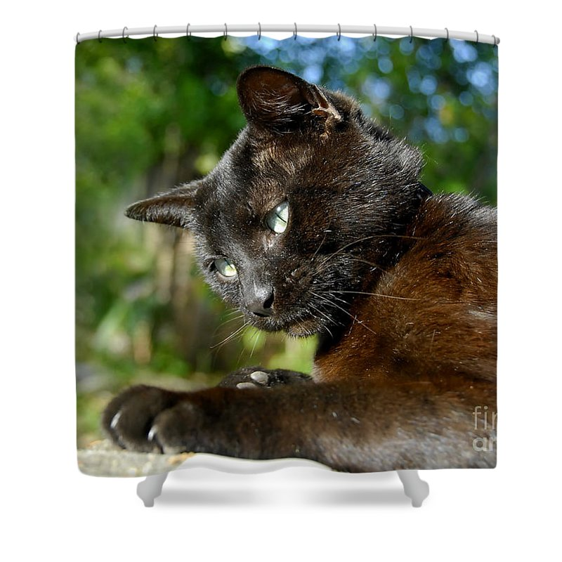 Cat Shower Curtain featuring the photograph Mr. Night by David Lee Thompson