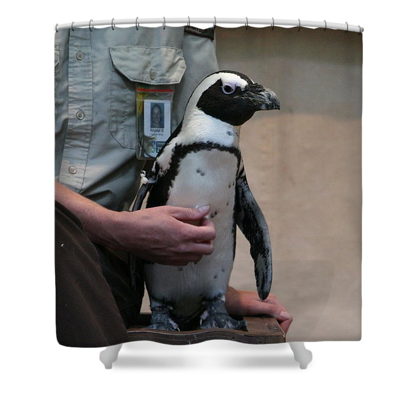 Penguin Shower Curtain featuring the photograph Mr. Penguin by Lynn Michelle