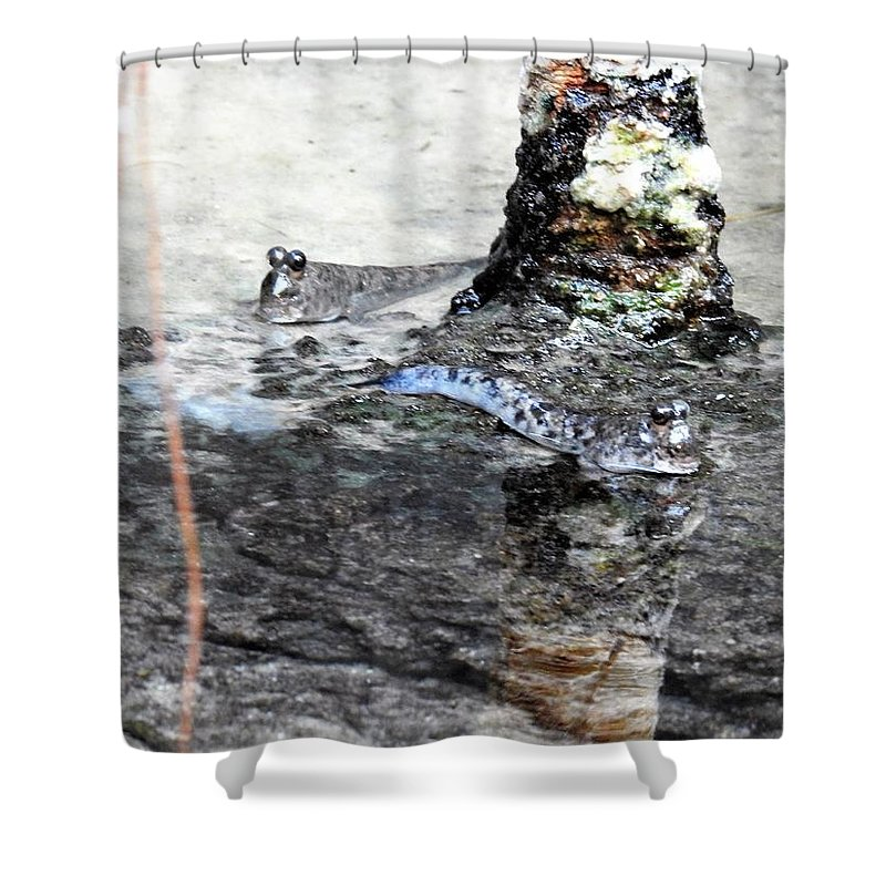 Zoo Shower Curtain featuring the photograph Mudskippers by Nicole Belvill