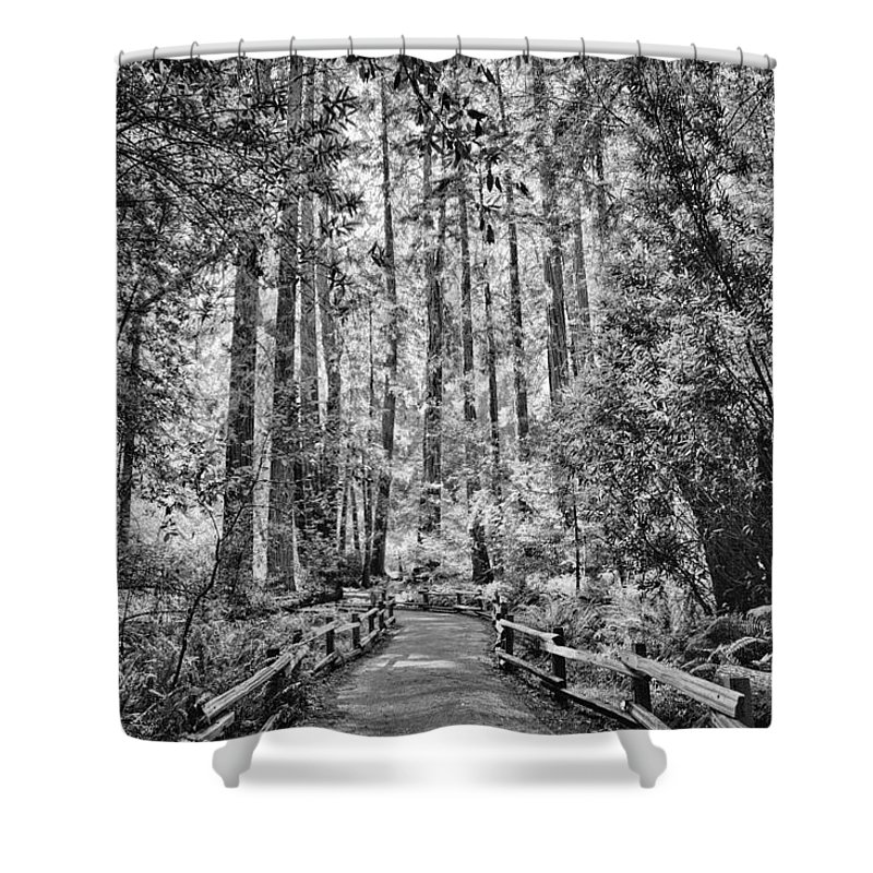 Tagsmuir Woods State Park Trees Redwood Redwood Trees Green Northern California Bay Area Bay Area Park Norcal Trees Forrest California State Park California Redwoods Nature Landscape Travel Bay Trees Shower Curtain featuring the photograph Muir Woods Bw by Diana Powell