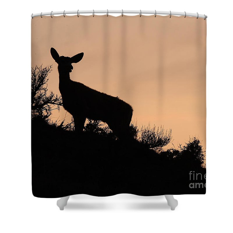 Deer Shower Curtain featuring the photograph Mule Deer Silhouetted Against Sunset Ridge by Max Allen