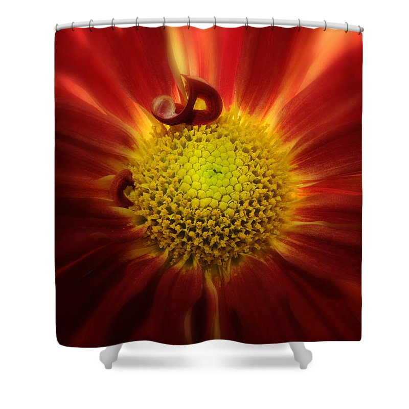 Mum Shower Curtain featuring the photograph Mum Red Rover by Carol Eade