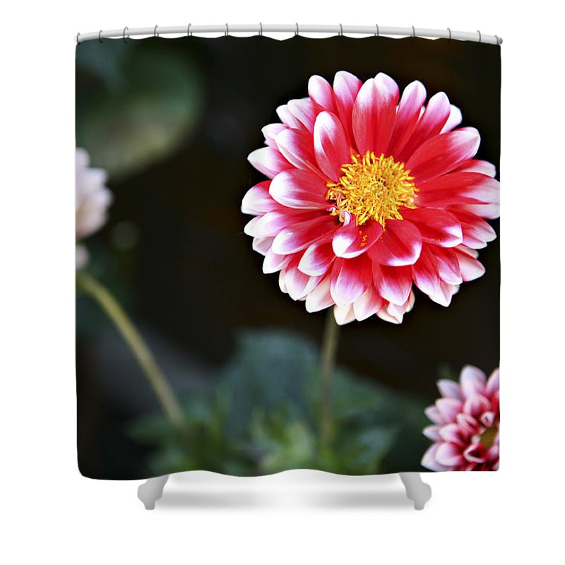 Three Shower Curtain featuring the photograph Mums by Marilyn Hunt