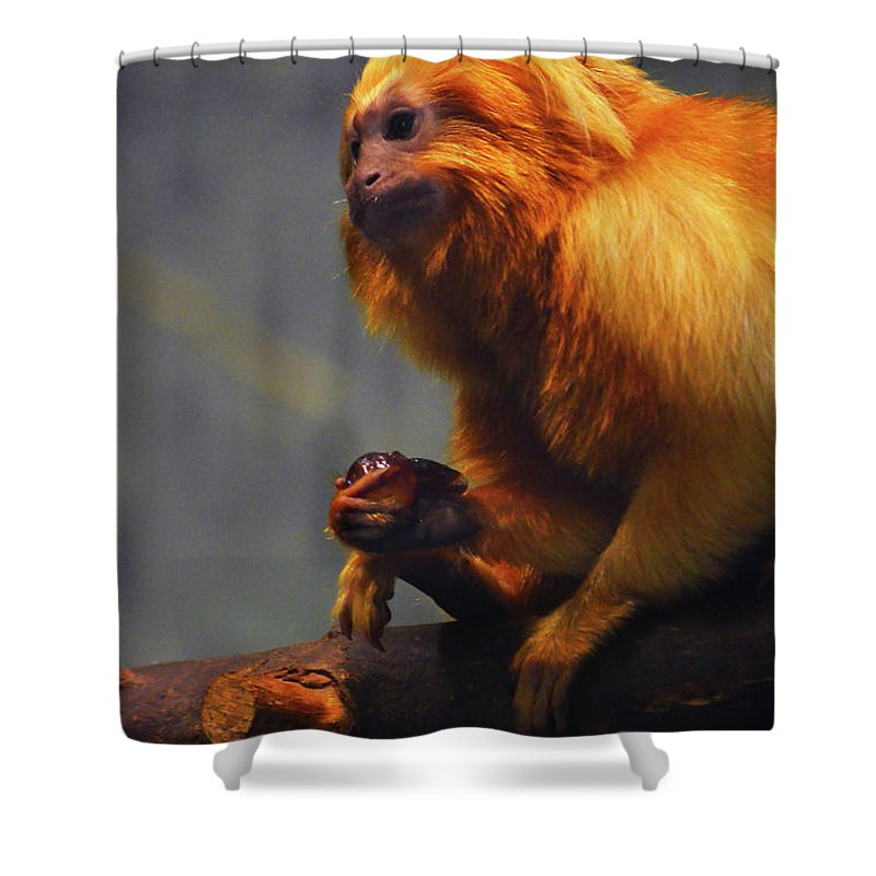 Shower Curtain featuring the photograph Munchin by Brian Sloan