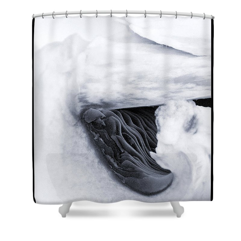 Mushroom Shower Curtain featuring the photograph Mushroom #3 - 700113 by TNT Images