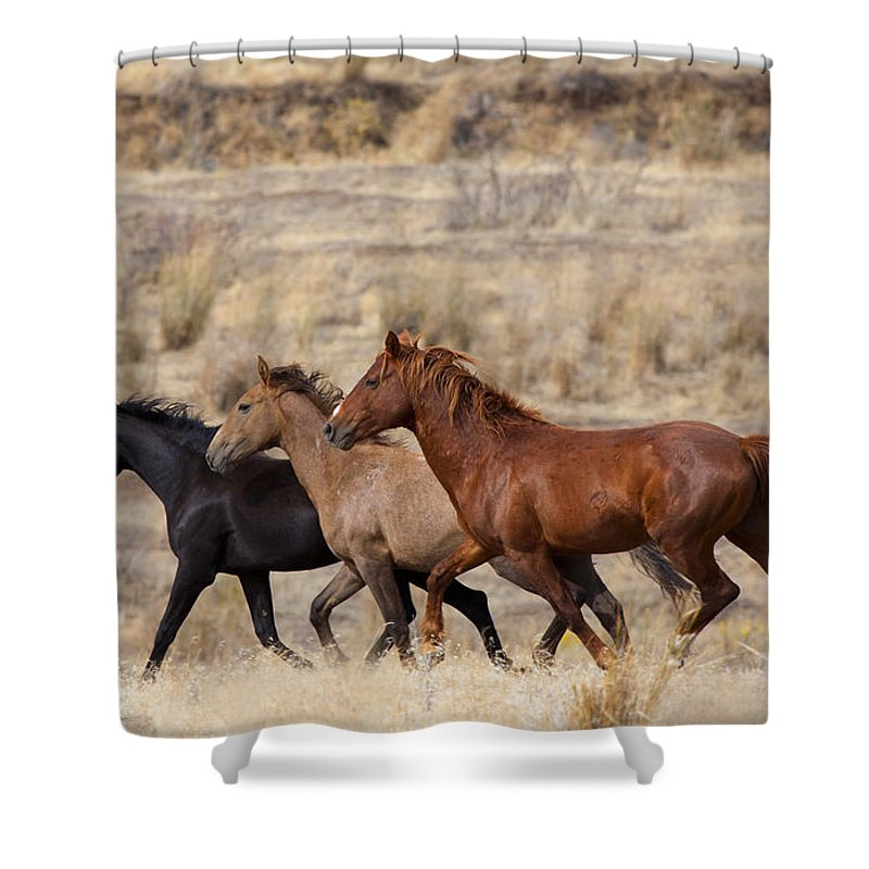 Horses Shower Curtain featuring the photograph Mustang Trio by Mike Dawson
