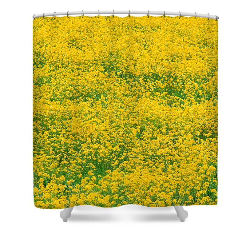 Bloom Shower Curtain featuring the photograph Mustard Flowers by Greg Vaughn - Printscapes