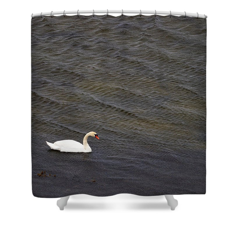 Lehtokukka Shower Curtain featuring the photograph Mute Swan 1 by Jouko Lehto