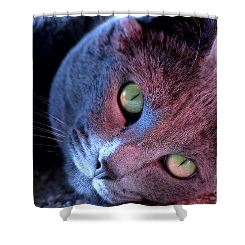 Russian Blue Cat Shower Curtain featuring the photograph My Best Friend by Luv Photography