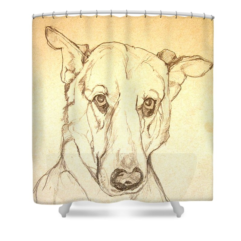 Pet Shower Curtain featuring the drawing My Boy Joshua by Jolante Hesse