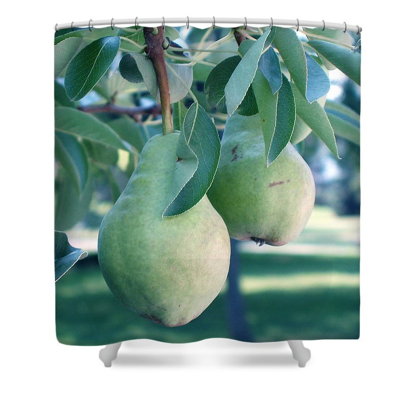 Pears Shower Curtain featuring the painting My Brothers Pear Tree by Wayne Potrafka
