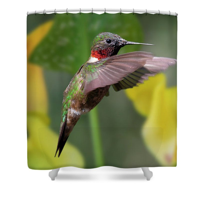 Hummingbird Shower Curtain featuring the photograph My Curious Fellow by Betsy Knapp