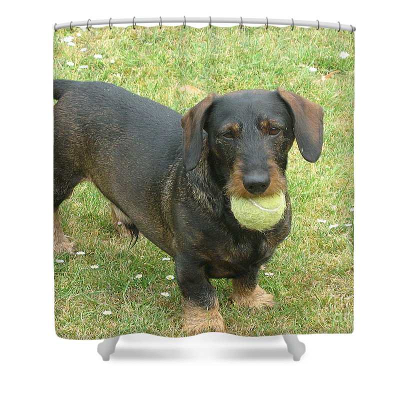 Dog Shower Curtain featuring the photograph My Favored Toy by Christiane Schulze Art And Photography