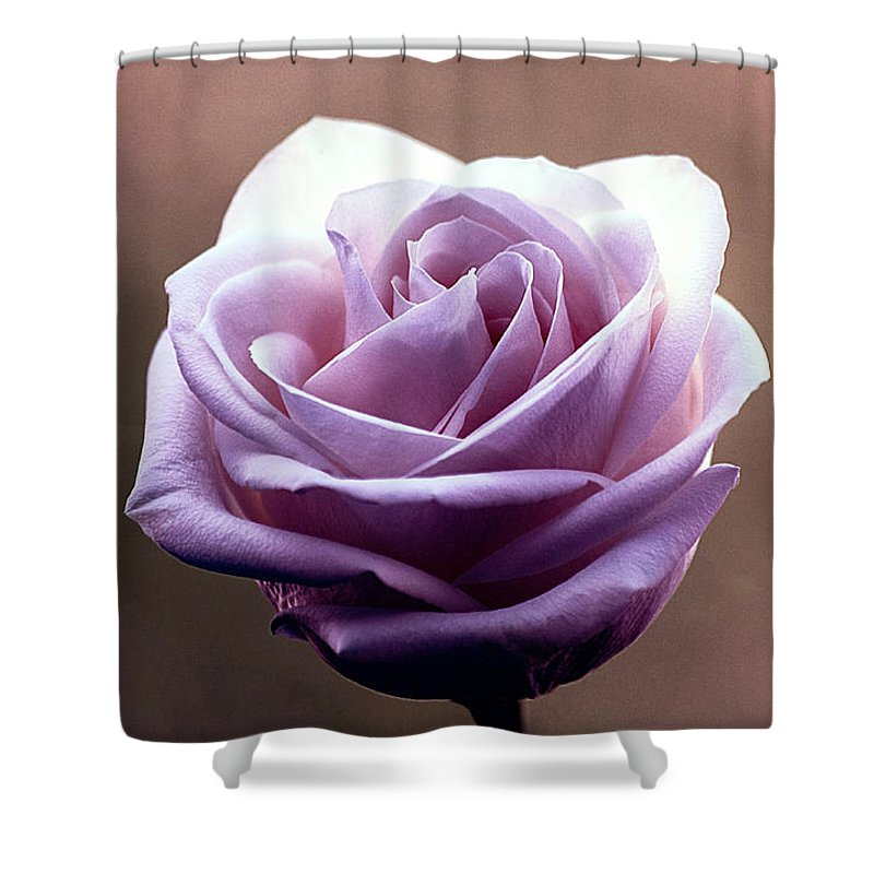 Rose Shower Curtain featuring the digital art My Favorite Rose by Elisabeth Lucas