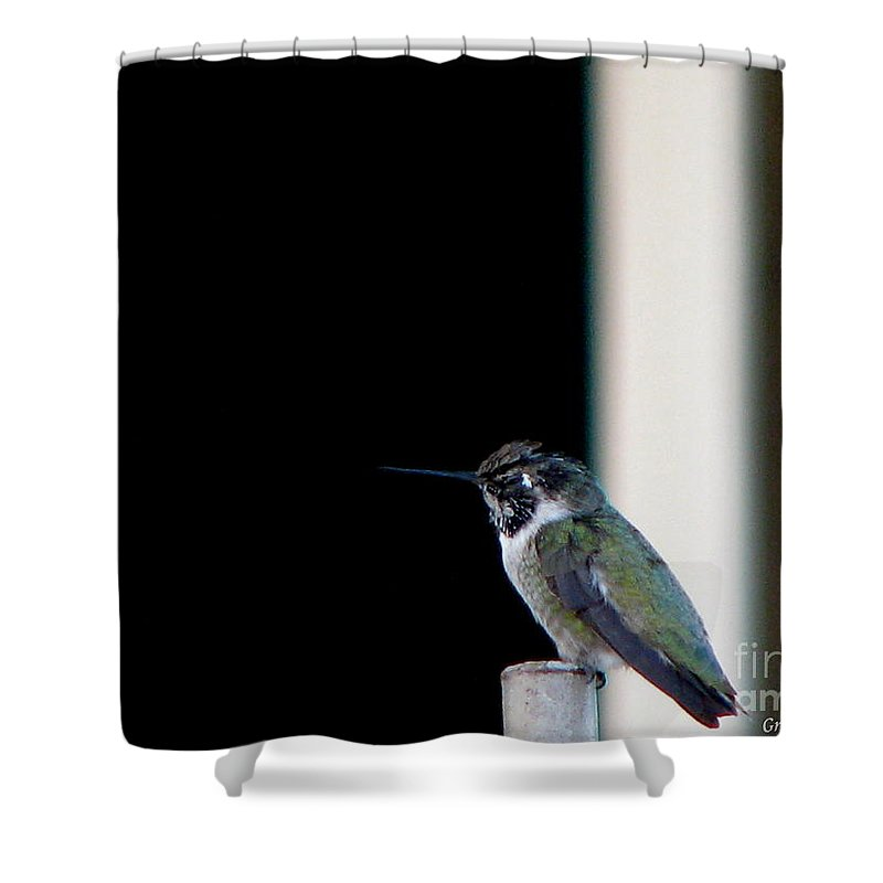 Patzer Shower Curtain featuring the photograph My Friend Stop By by Greg Patzer