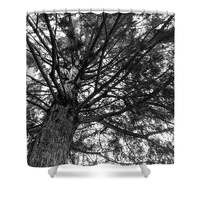 Tree Shower Curtain featuring the photograph My Tree by Marsha McAlexander