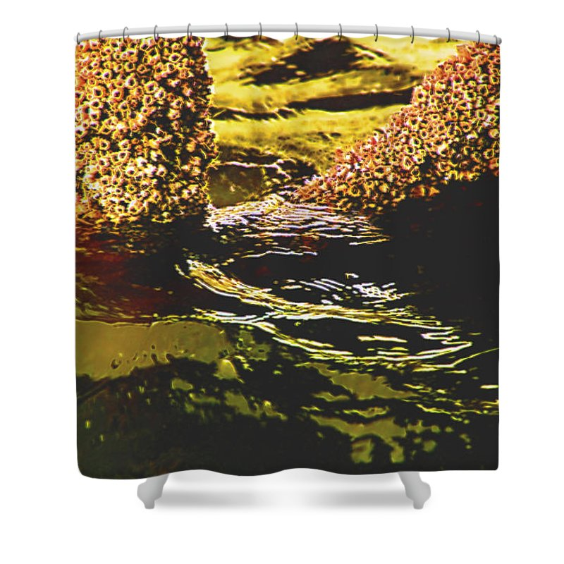 Nature Shower Curtain featuring the photograph Mysterious Barnacles by Marshall Barth
