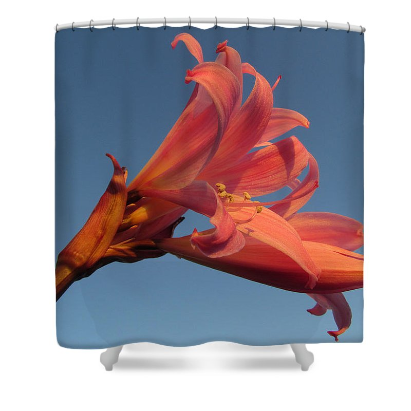 Art Sale Shower Curtain featuring the photograph Naked Lady by John Irons