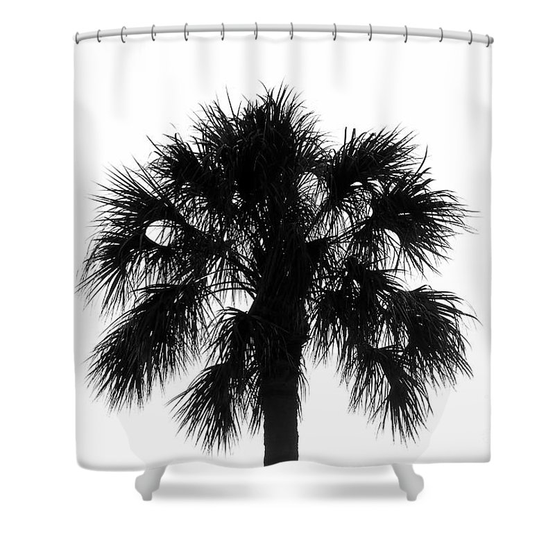 Palm Tree Shower Curtain featuring the photograph Naked Palm by David Lee Thompson