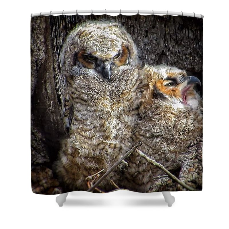 Great Horned Owl Shower Curtain featuring the photograph Nap time by Rrrose Pix