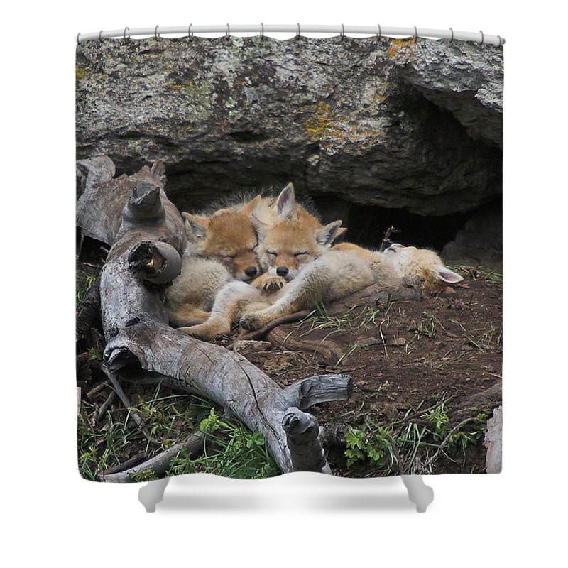 Coyote Shower Curtain featuring the photograph Nap Time by Steve Stuller