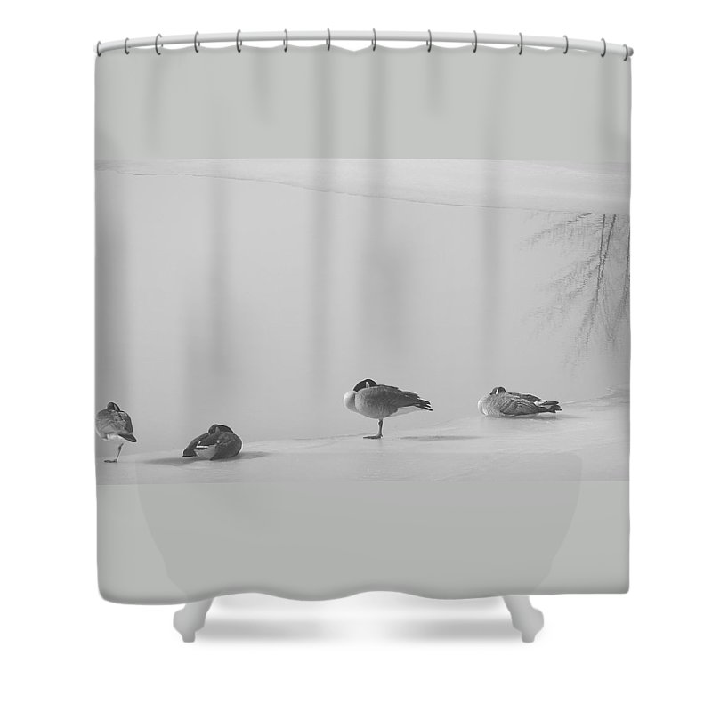 Shower Curtain featuring the photograph Napping On Ice by Luciana Seymour