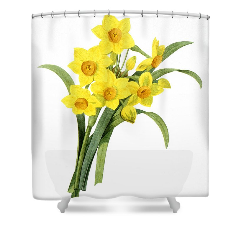 1833 Shower Curtain featuring the photograph Narcissus (n. Tazetta) by Granger