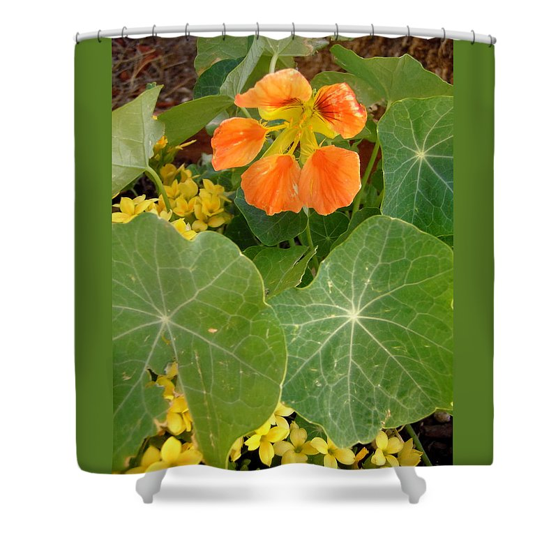 Flowers Shower Curtain featuring the photograph Nasturtium by Stephanie Moore