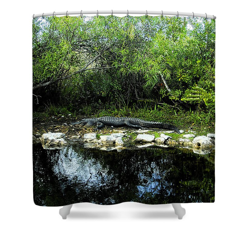Art Shower Curtain featuring the painting Native Floridian by David Lee Thompson