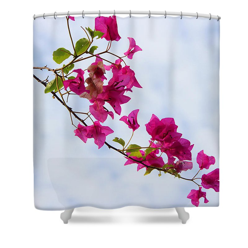Shower Curtain featuring the photograph Natural by Brian Gomes