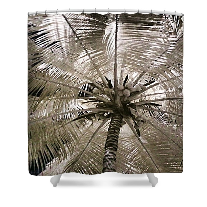 Palm Shower Curtain featuring the photograph Natural Umbrella by Galeria Trompiz