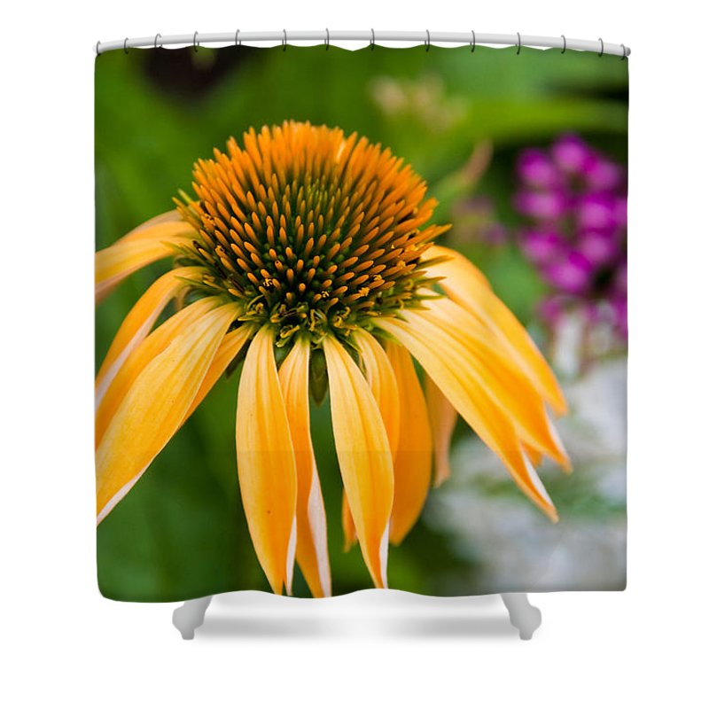 Flower Shower Curtain featuring the photograph Nature by Bob Mintie