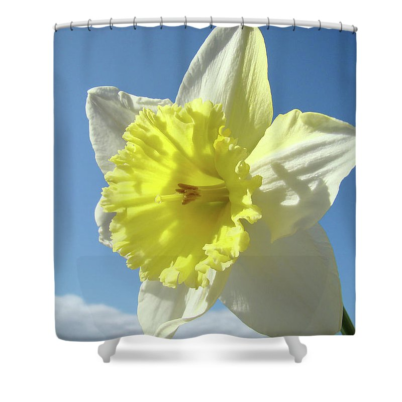 �daffodils Artwork� Shower Curtain featuring the photograph Nature Daffodil Flowers Art Prints Spring Nature Art by Baslee Troutman