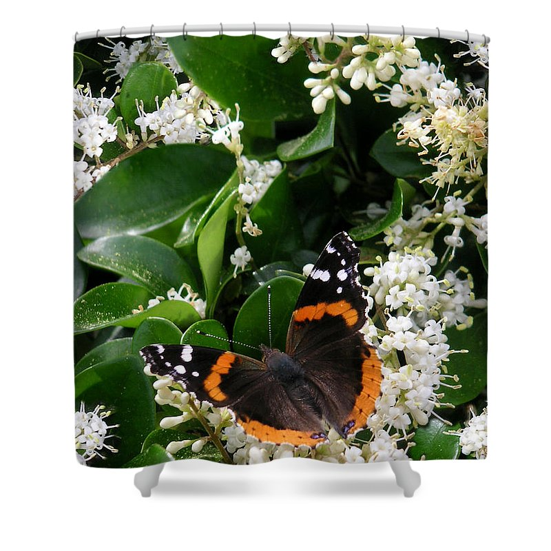 Nature Shower Curtain featuring the photograph Nature In The Wild - A Sweet Stop by Lucyna A M Green