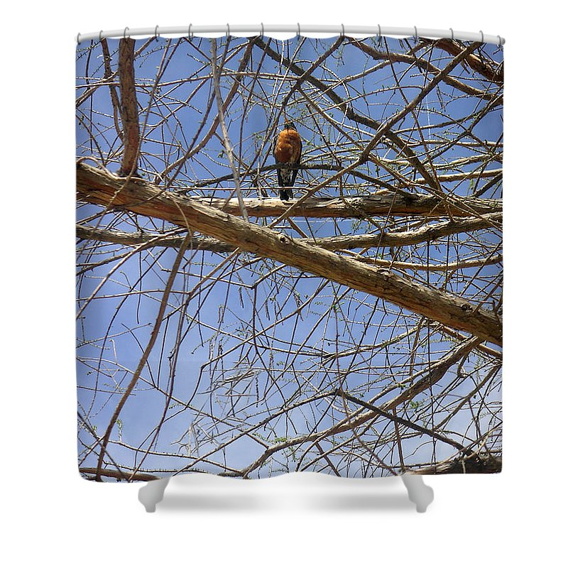 Nature Shower Curtain featuring the photograph Nature In The Wild - Annoucing Spring by Lucyna A M Green