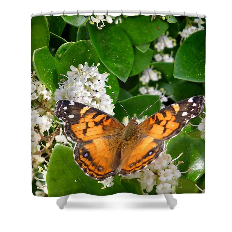 Nature Shower Curtain featuring the photograph Nature In The Wild - On Golden Wings by Lucyna A M Green