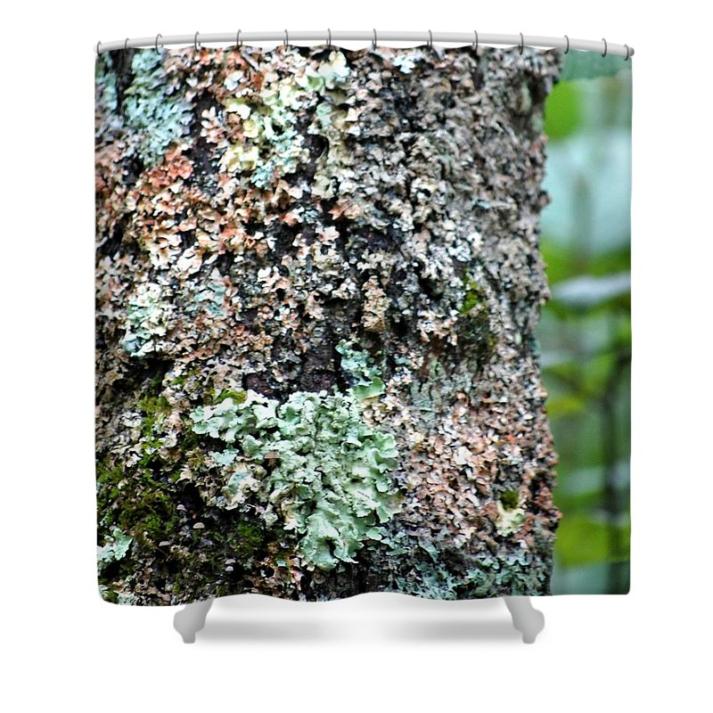 Digital Photograph Shower Curtain featuring the photograph Nature Painted Tree Bark by David Lane