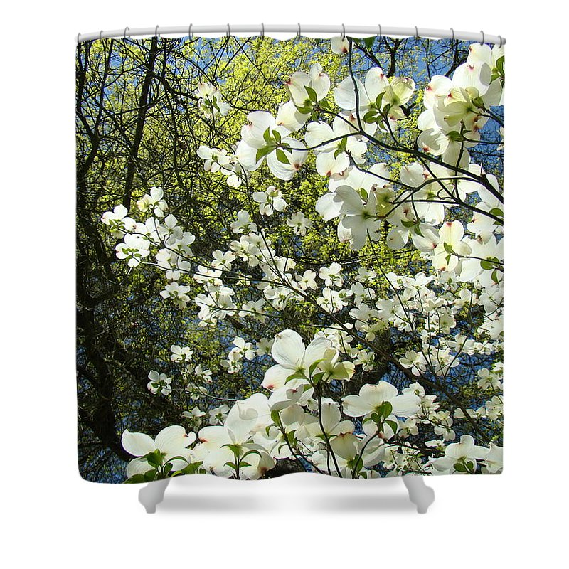 Dogwood Shower Curtain featuring the photograph Nature Tree Landscape Art Prints White Dogwood Flowers by Baslee Troutman