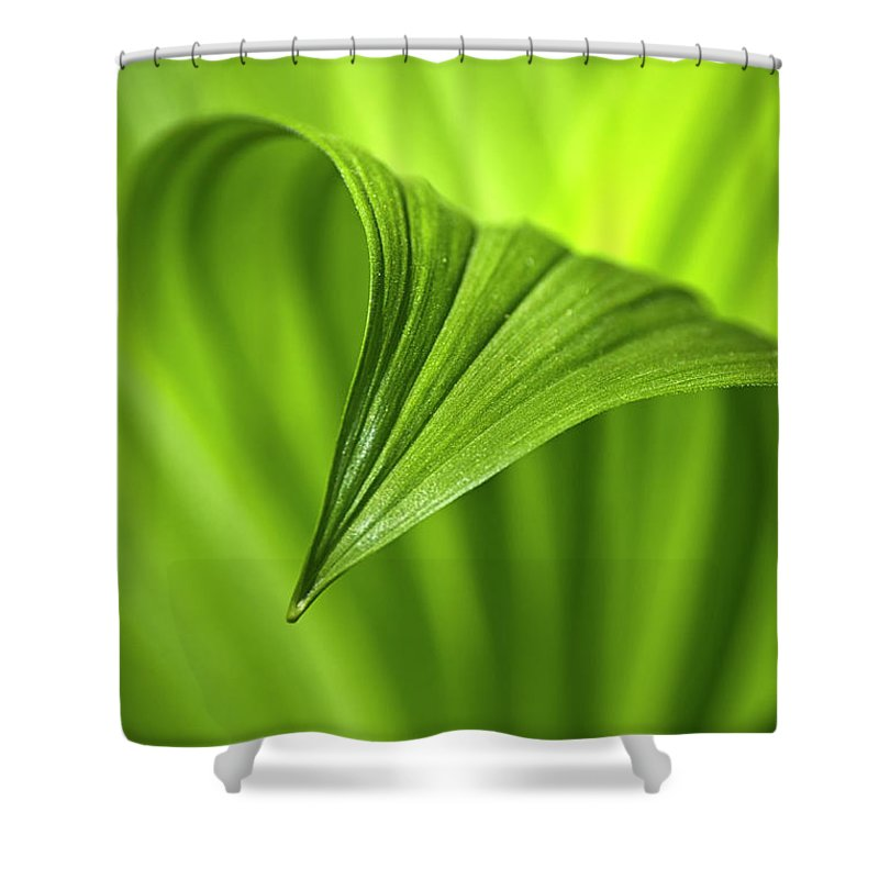 Nature Shower Curtain featuring the photograph Nature Unfurls by Christina Rollo