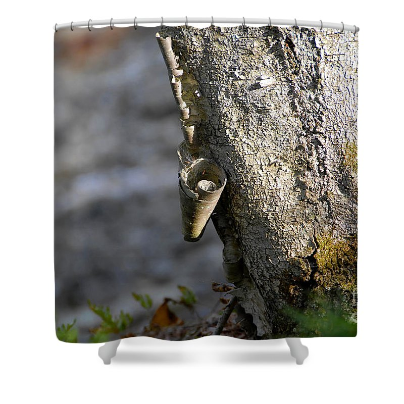 Wood Shower Curtain featuring the photograph Nature's Detail by David Lee Thompson
