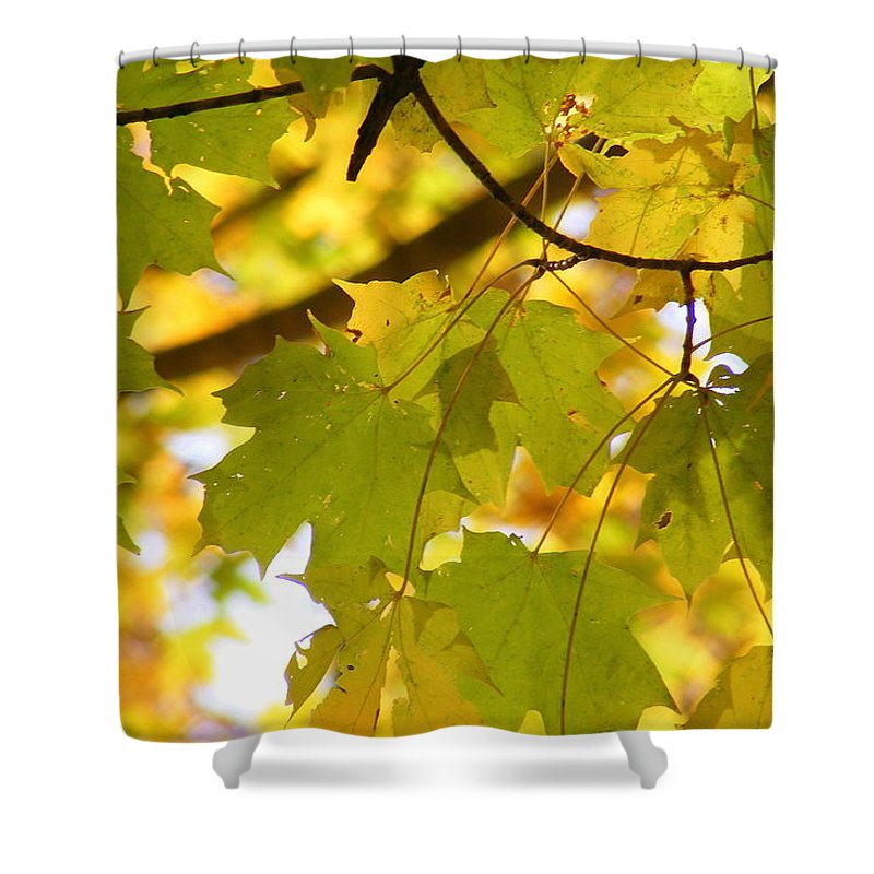 Leaves Shower Curtain featuring the photograph Natures Glow by Ed Smith