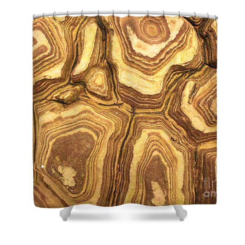 Nature Shower Curtain featuring the photograph Nature's Interesting Patterns by Carol Groenen