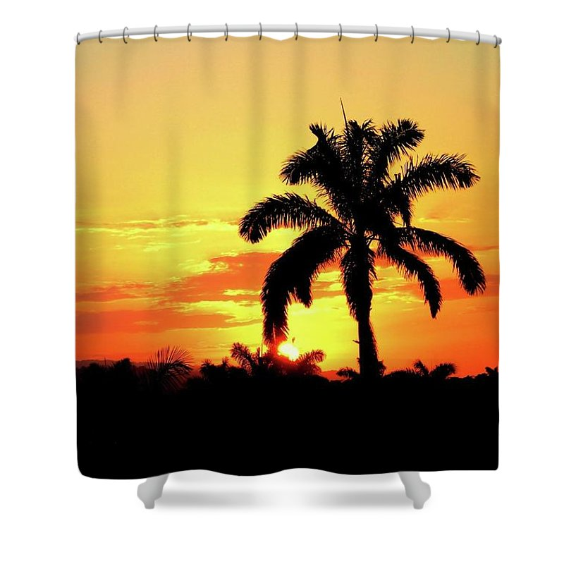 Palm Tree Shower Curtain featuring the photograph Near Perfect Palm Tree by Patti Roberts