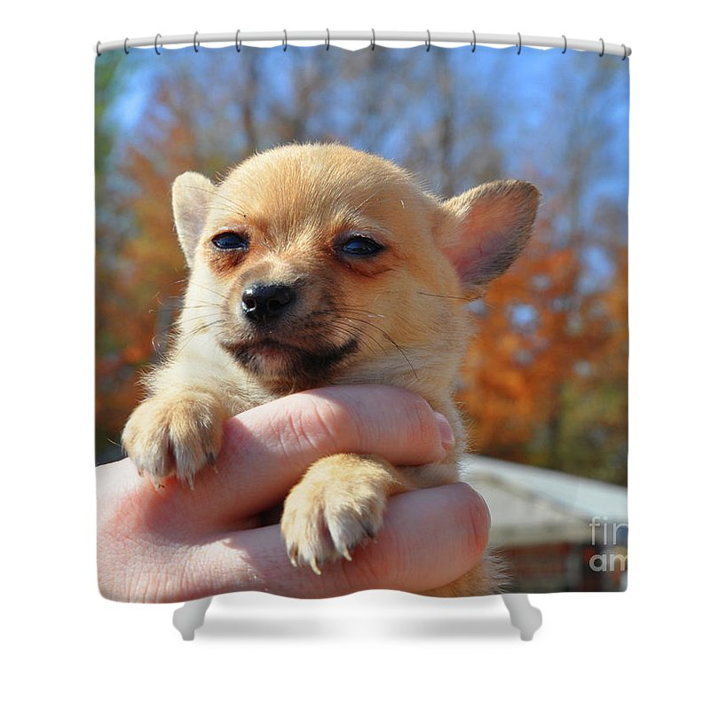 Baby Puppy Shower Curtain featuring the photograph Need Somebody To Love by Brittany Horton