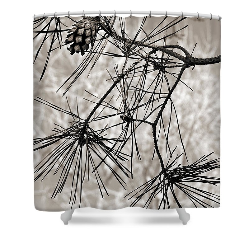 Tree Shower Curtain featuring the photograph Needles Everywhere by Marilyn Hunt