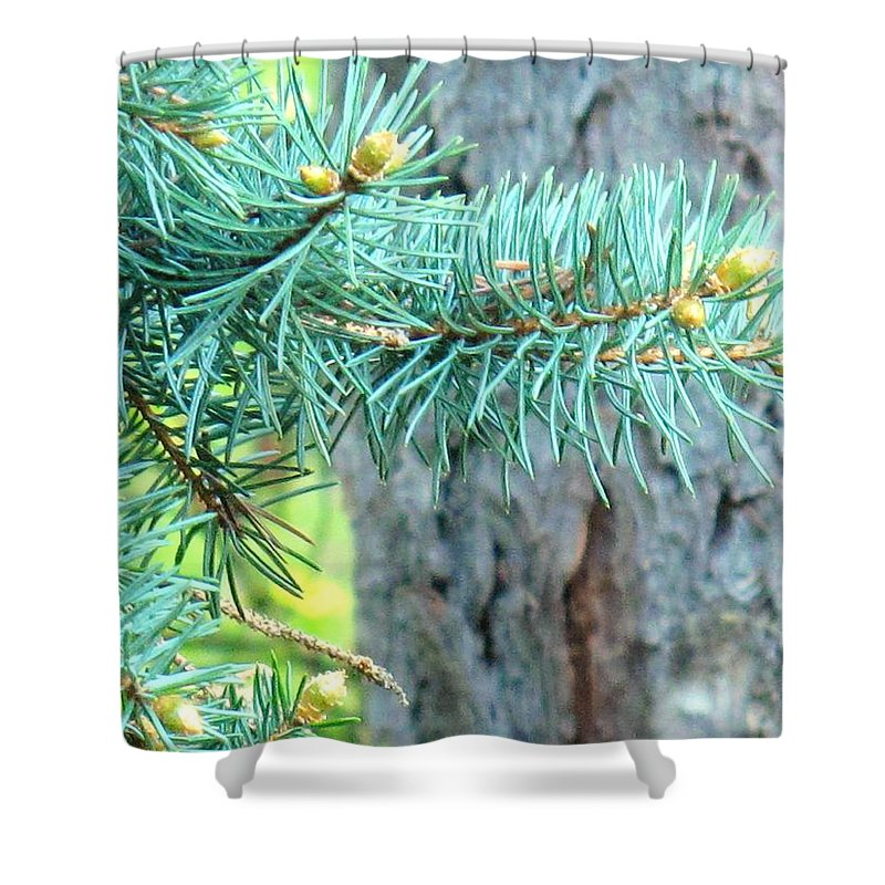 Pine Shower Curtain featuring the photograph Needles by Ian MacDonald