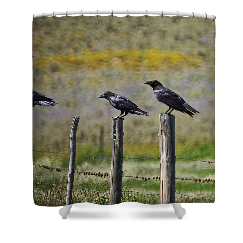 Crows Shower Curtain featuring the photograph Neighborhood Watch Crows by Heather Coen